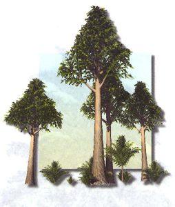 Arbre-carbonifère
