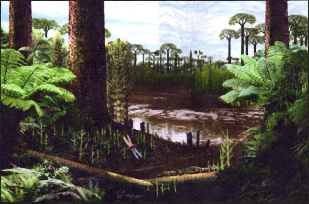 Forêt-du-carbonifère