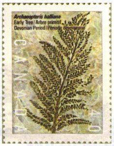 Fougère-fossile