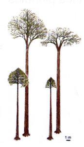 Lépidodendron