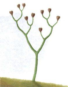 Plante-vasculaire