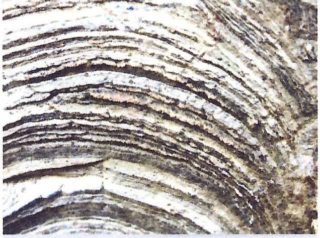 stromatolite blanc