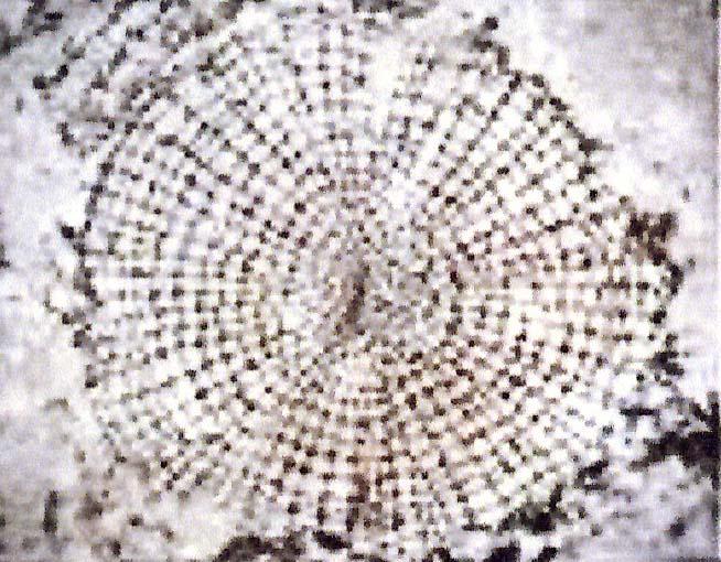 structure-du-bois